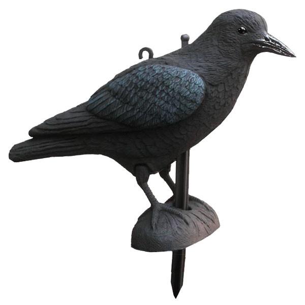 Lockvogel Krähe -